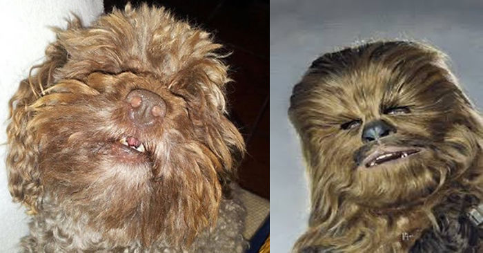 Chewbacca Dog