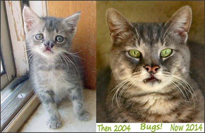 Bugs! The Harelipped Feline