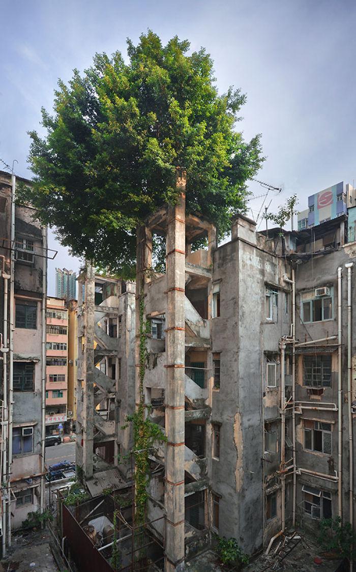 Plants Winning A Fight Against Concrete