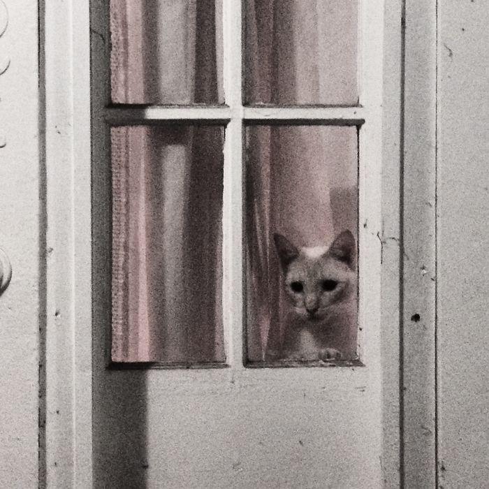 Wilson In The Window