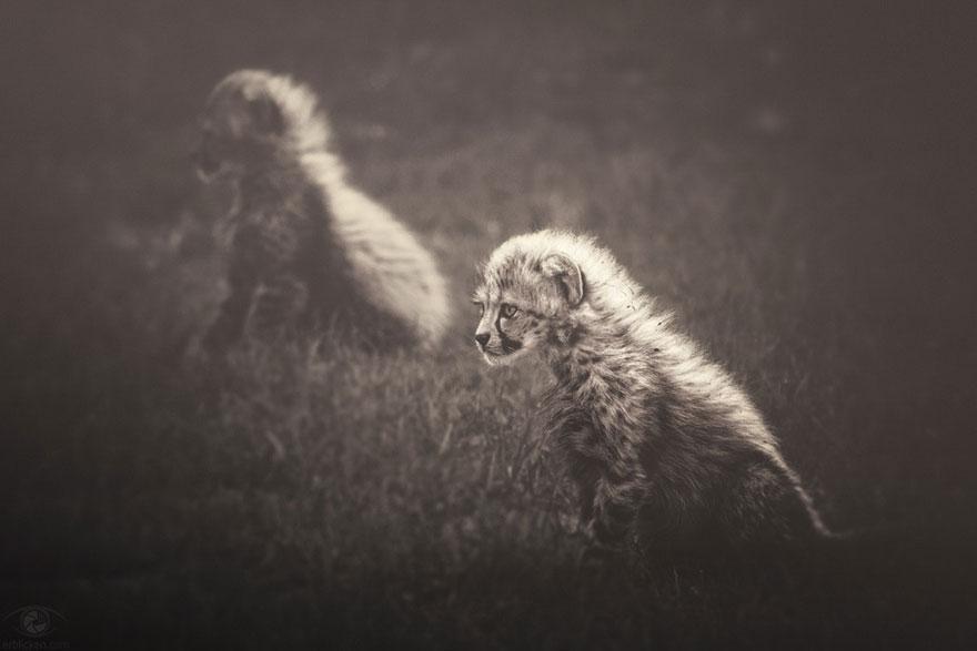 africa-souls-zoo-photography-manuela-kulpa-2
