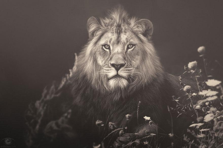 africa-souls-zoo-photography-manuela-kulpa-3