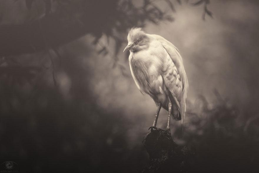 africa-souls-zoo-photography-manuela-kulpa-5