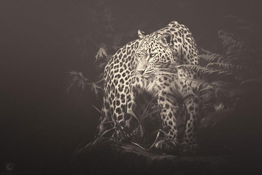 africa-souls-zoo-photography-manuela-kulpa-6