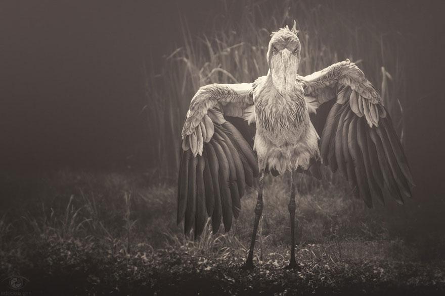 africa-souls-zoo-photography-manuela-kulpa-8