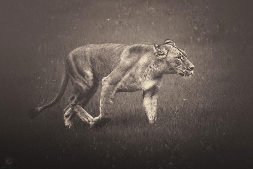 africa-souls-zoo-photography-manuela-kulpa-9