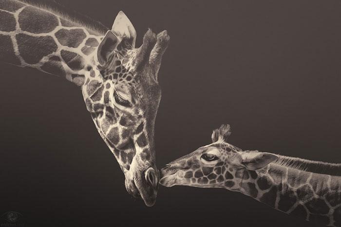 Soulful Photographs Of Zoo Animals By Manuela Kulpa