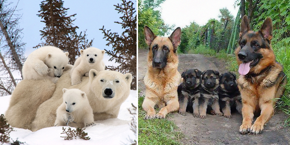 22+ Adorable Animal Family Portraits