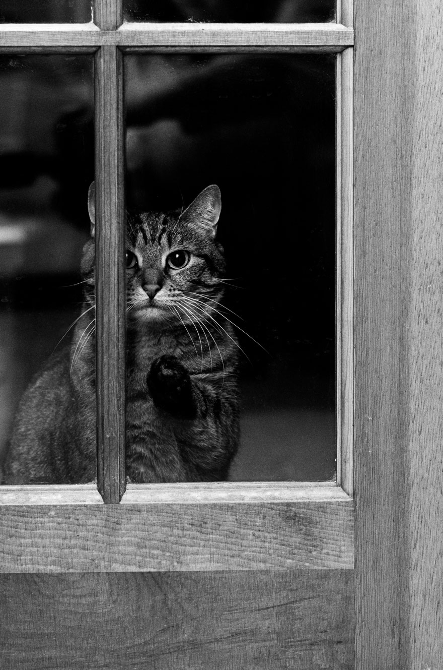 animals-looking-through-the-window-12