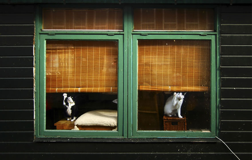 animals-looking-through-the-window-13