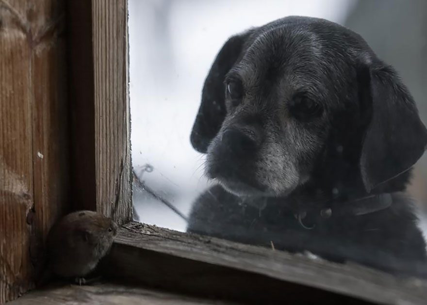 animals-looking-through-the-window-2