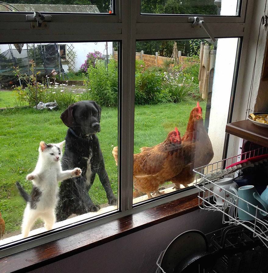 animals-looking-through-the-window-20