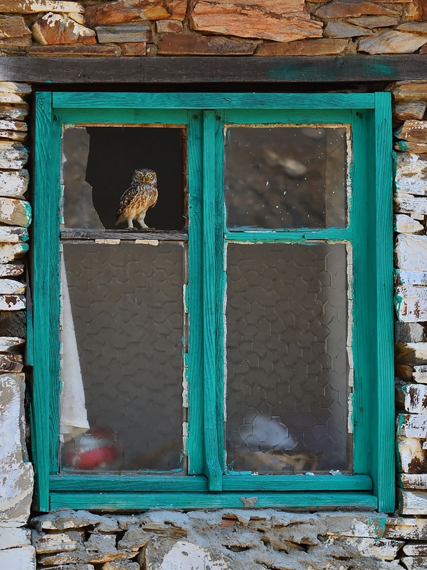animals-looking-through-the-window-7