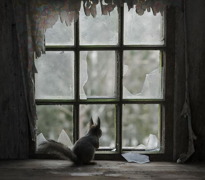 18 Beautiful Photos Of Animals Looking Through Windows