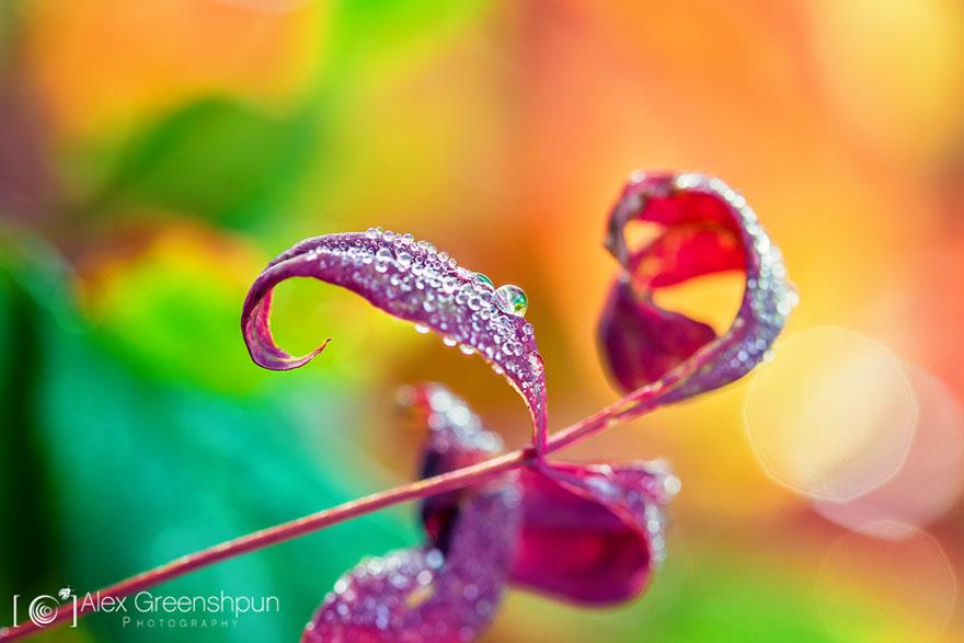 autumn-photography-alex-greenshpun-1