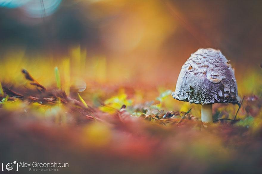 autumn-photography-alex-greenshpun-10