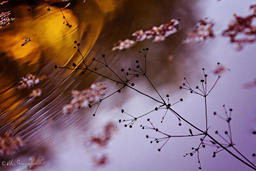 autumn-photography-alex-greenshpun-15