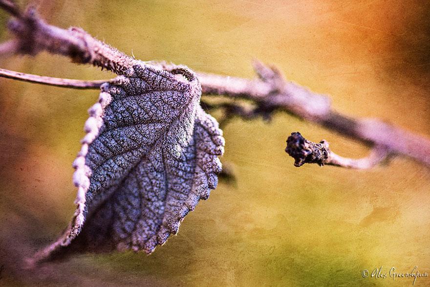 autumn-photography-alex-greenshpun-16