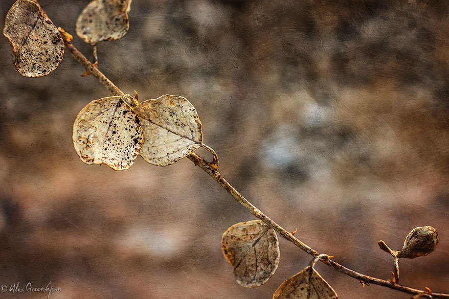 autumn-photography-alex-greenshpun-19