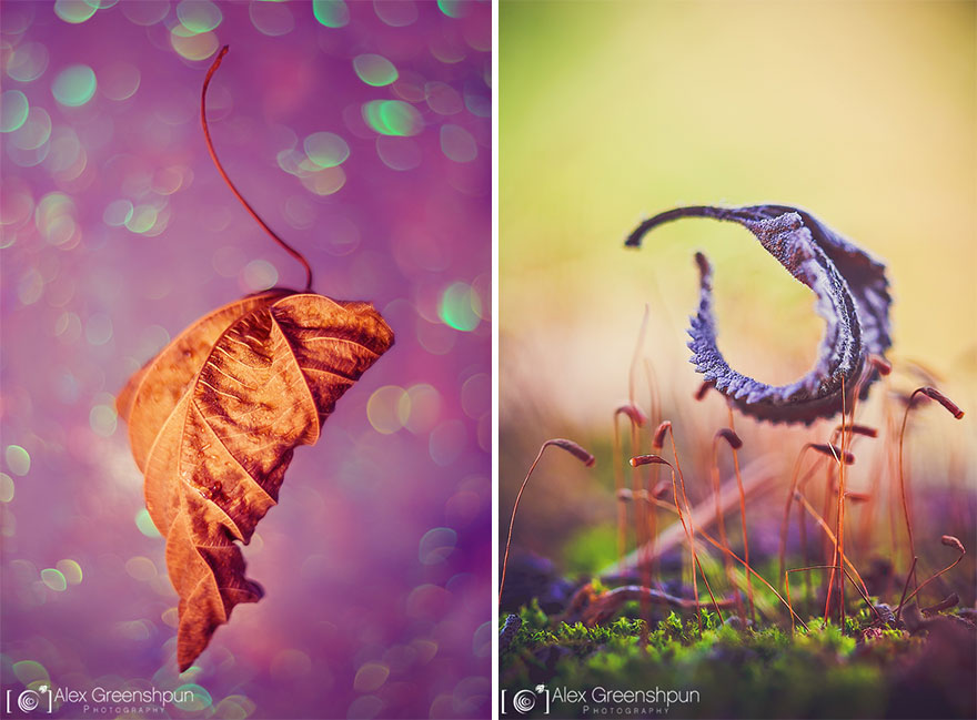 autumn-photography-alex-greenshpun-21