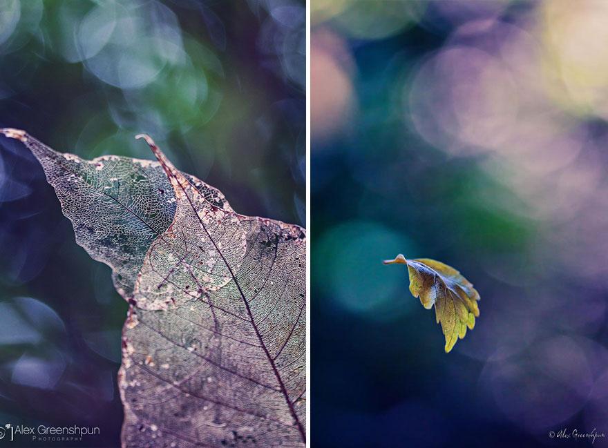 autumn-photography-alex-greenshpun-22