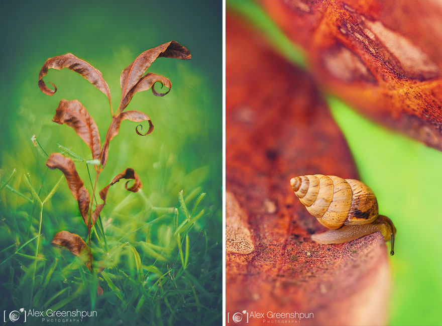 autumn-photography-alex-greenshpun-23