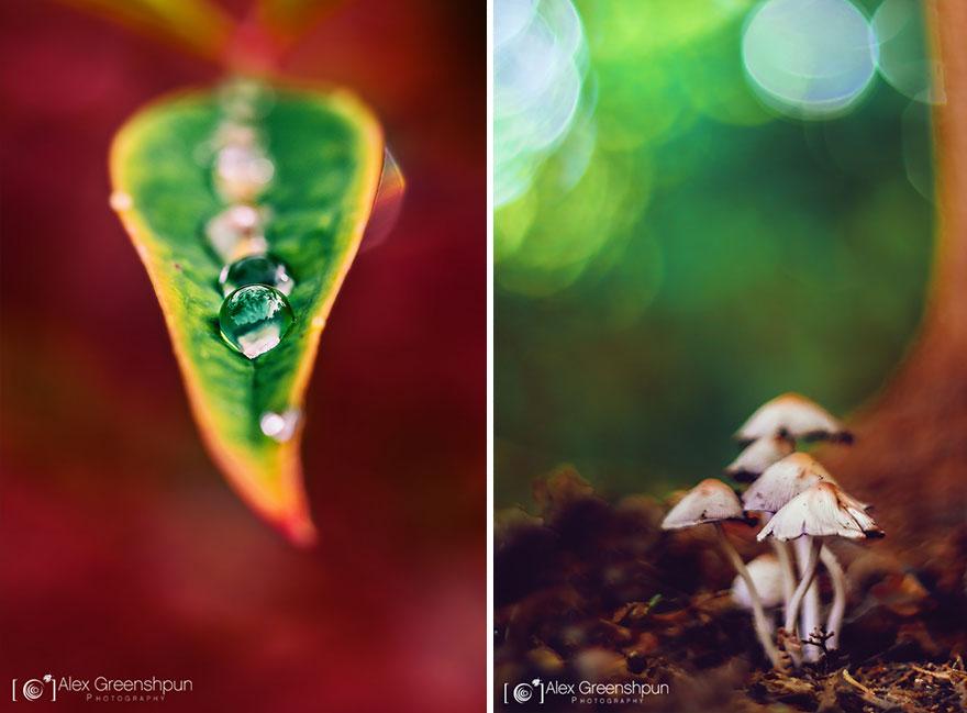 autumn-photography-alex-greenshpun-24