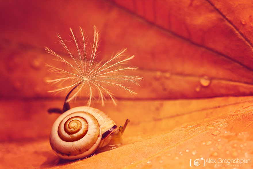 autumn-photography-alex-greenshpun-6