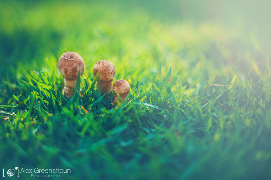autumn-photography-alex-greenshpun-9