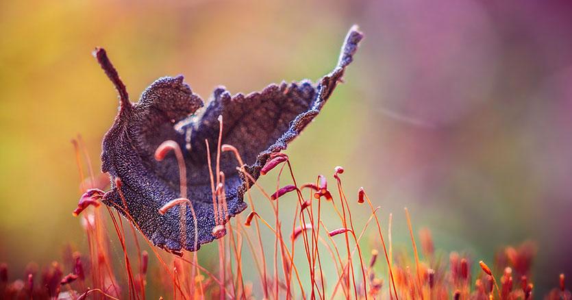 The Magic Of Fall Captured By Alex Greenshpun