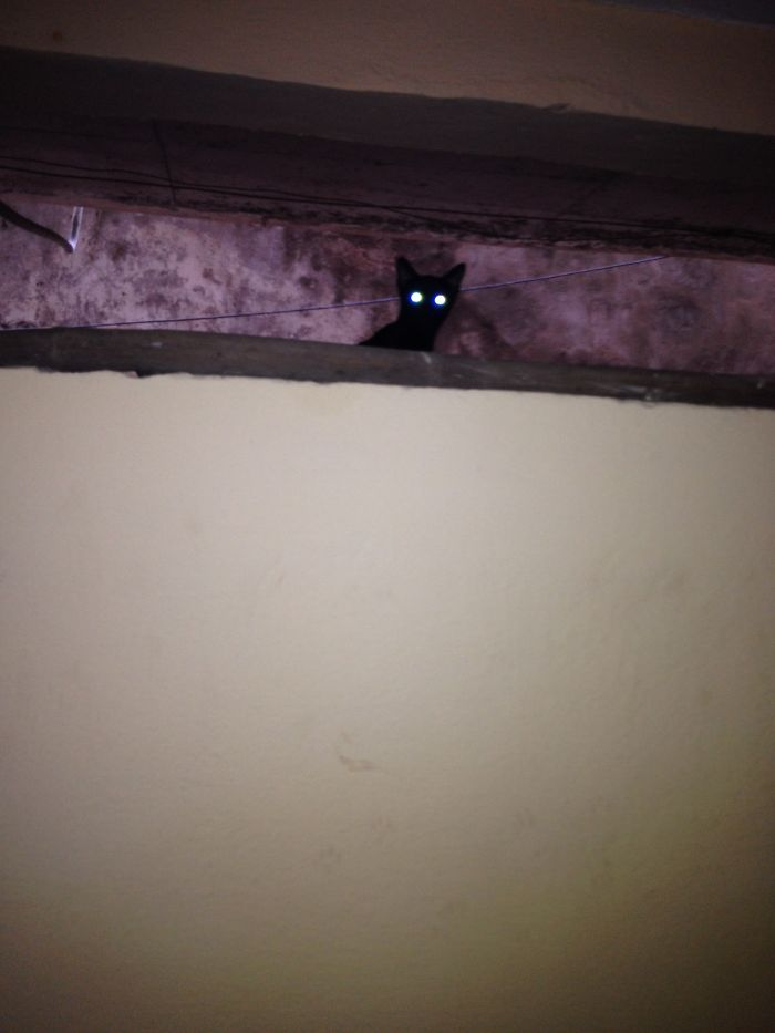 The Ghost Cat