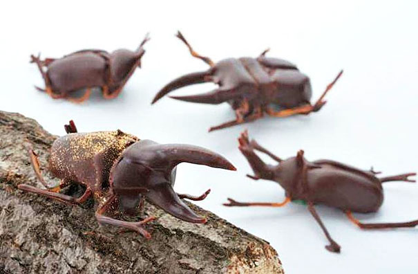 Chocolate Rhinocerous Beetles