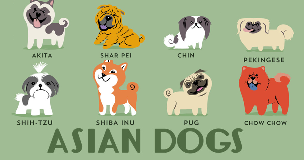 Dogs Of The World: Cute Posters Show The Origins Of 200+ Dog Breeds