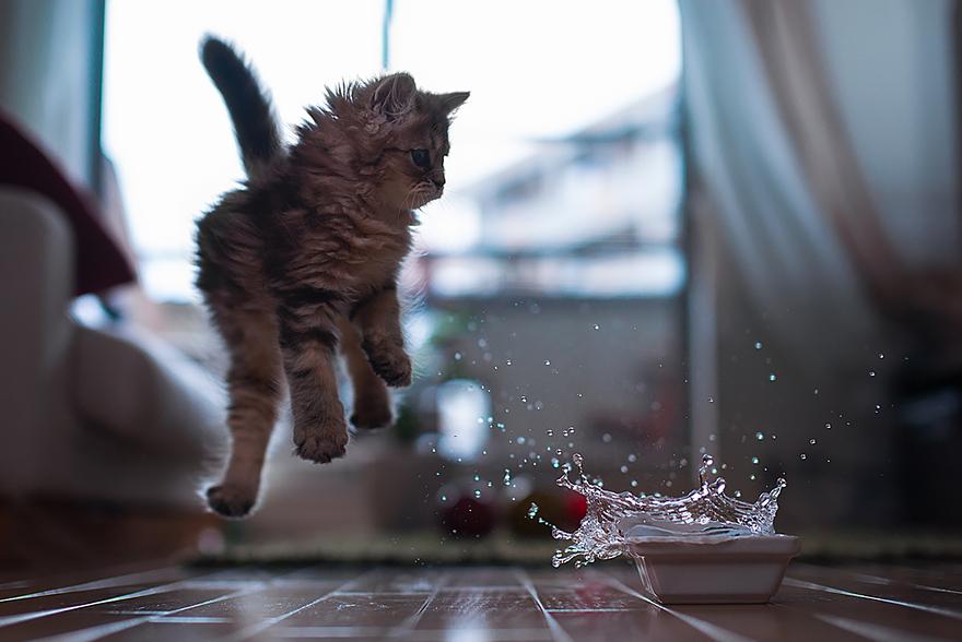Jumping Cats At Play Look Like Ninjas | Bored Panda