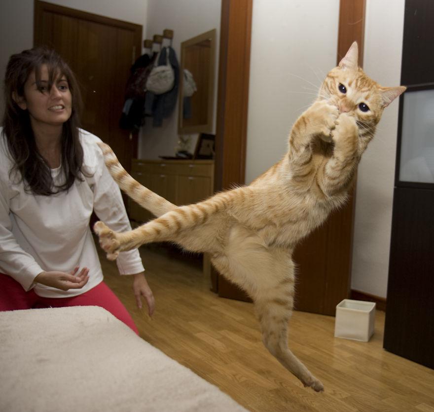 http://static.boredpanda.com/blog/wp-content/uploads/2014/09/funny-jumping-cats-92__880.jpg