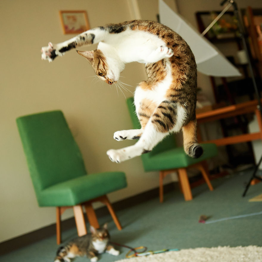 Funny Cat Videos Cats Jumping