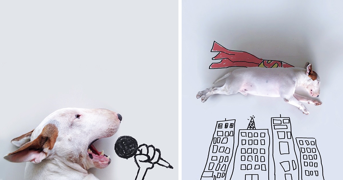 Dog Owner Creates Fun Illustrations With His Bull Terrier