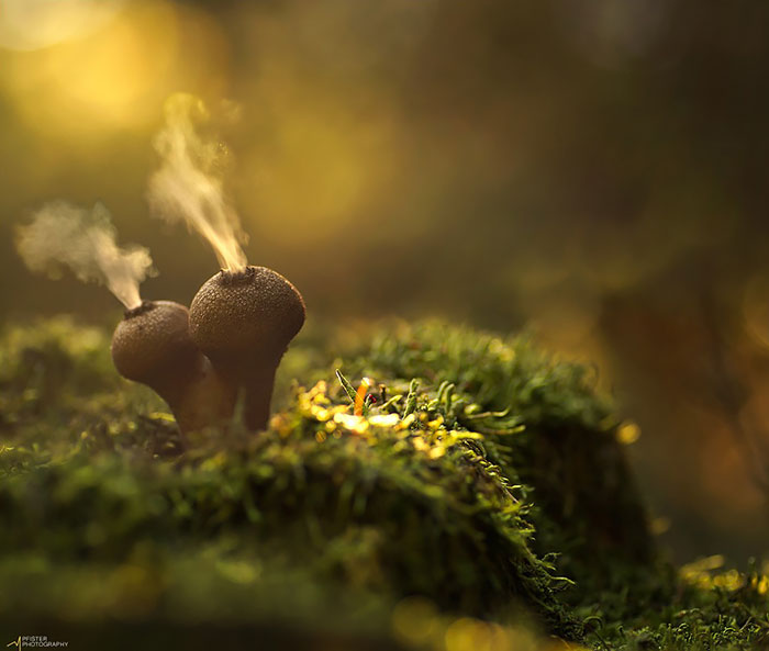 The Mystical World Of Mushrooms Captured In Photos