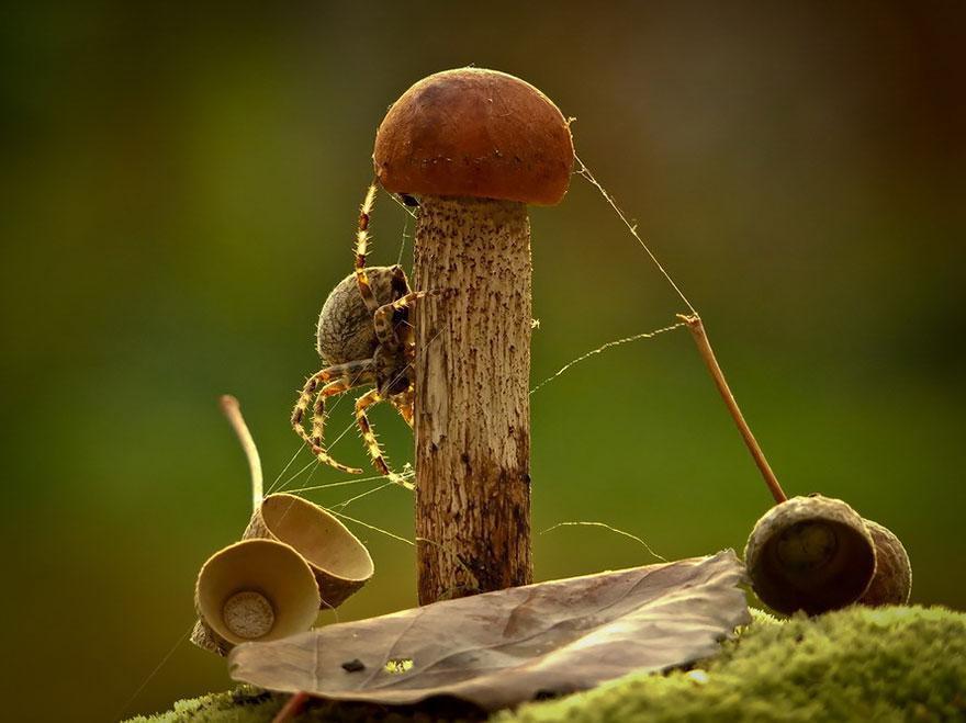 mushroom-photography-vyacheslav-mishchenko-31