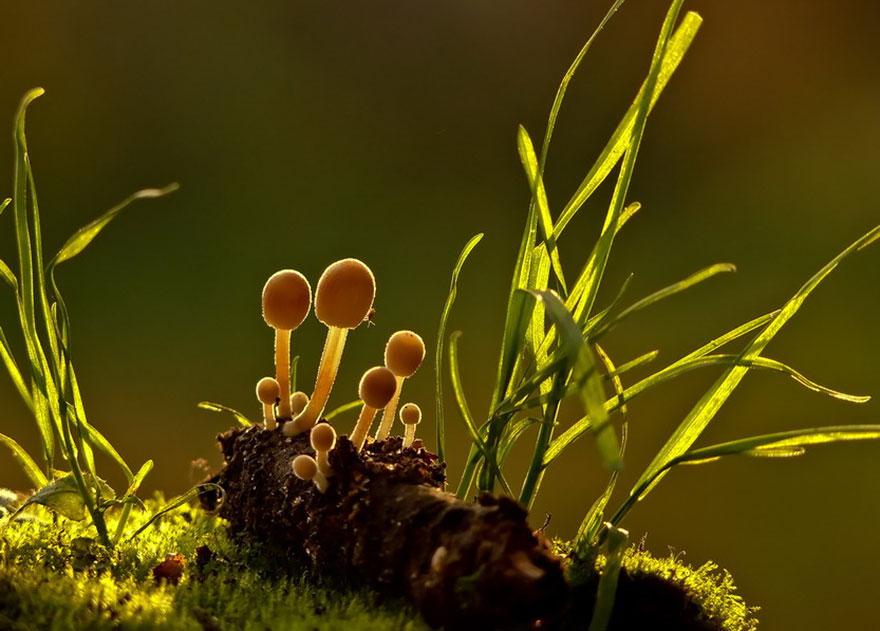 mushroom-photography-vyacheslav-mishchenko-32