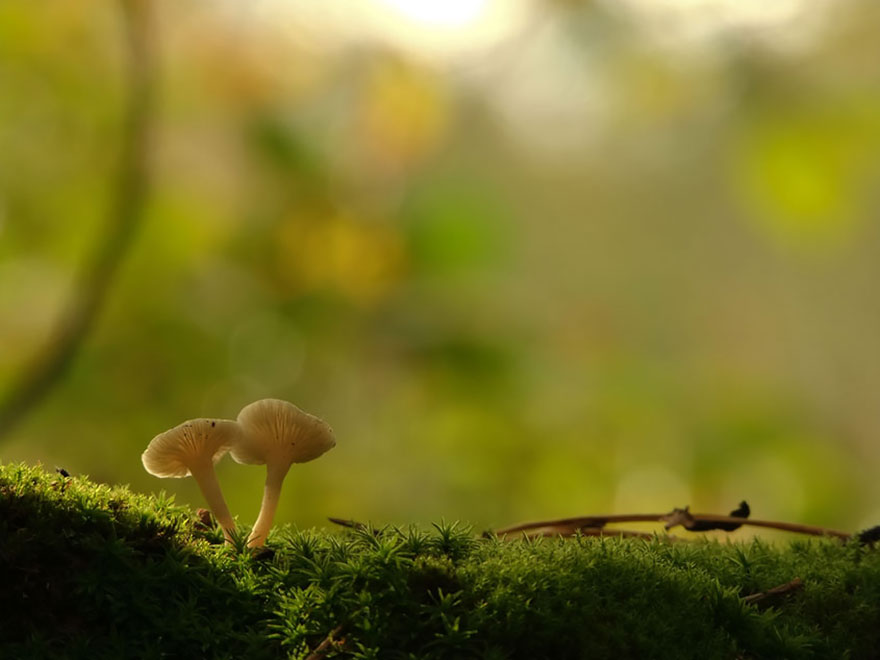 mushroom-photography-vyacheslav-mishchenko-36