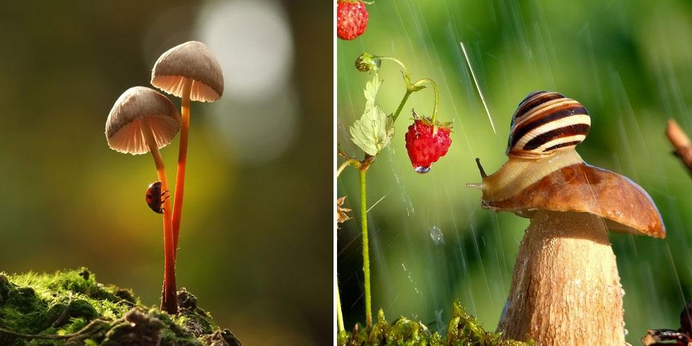 A Magical World Of Mushrooms By Vyacheslav Mishchenko