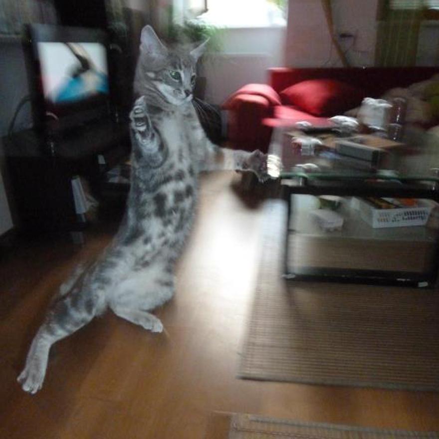 Columbo Ninja Cat