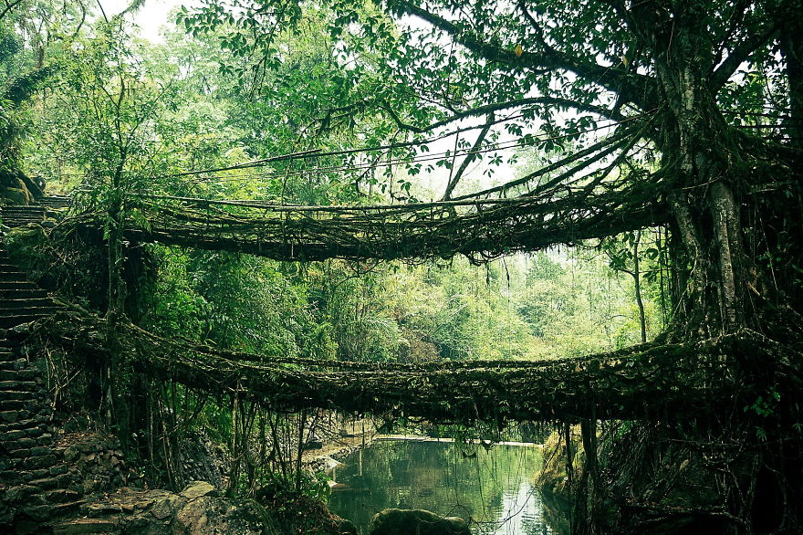 Root Bridge In India