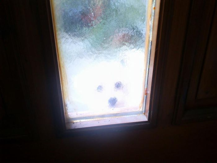 Little Polar Bear In The Snowstorm :-) Let Me In :-)