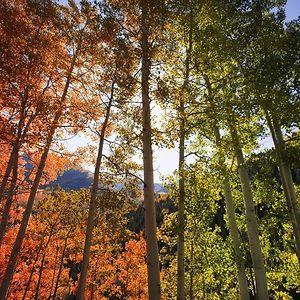 Rainbow Trees, Aspen, Colorado
