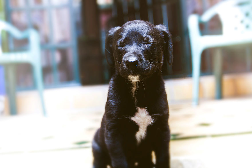 rescued-dog-kharma-8