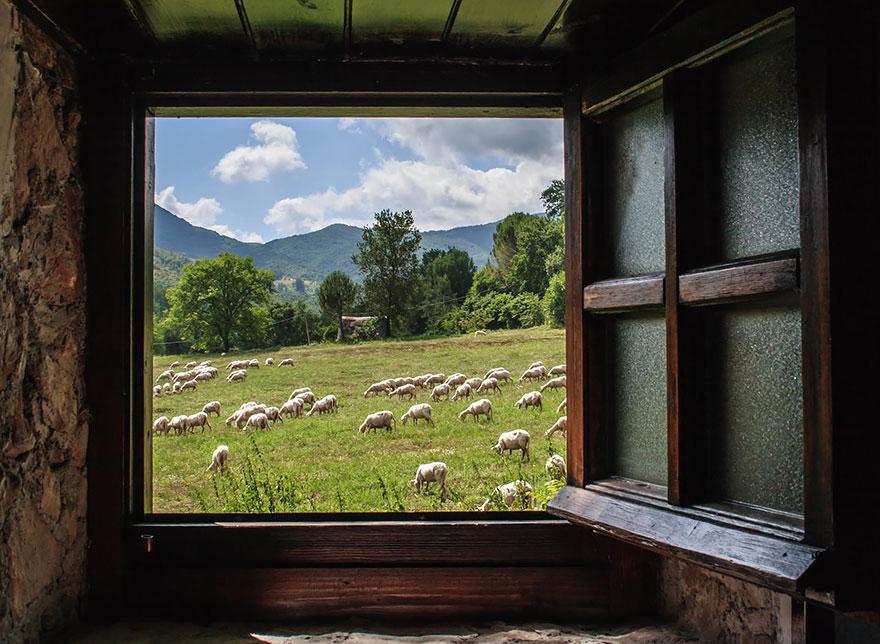 sheep-herds-around-the-world-11