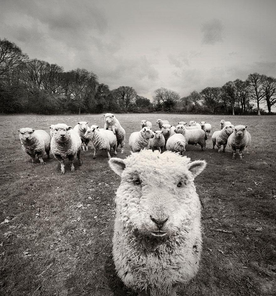 sheep-herds-around-the-world-55