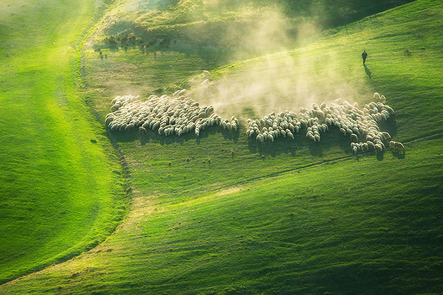 sheep-herds-around-the-world-9